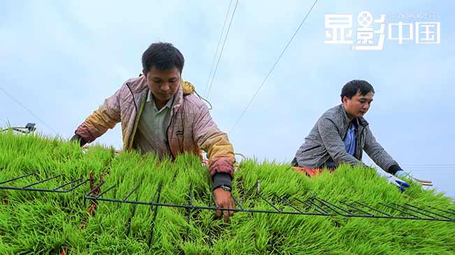 """用新农机种田的年轻""""新农人"""""""
