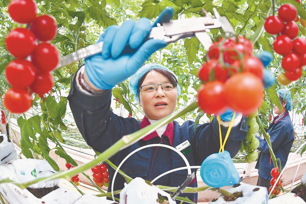 科技助力蔬菜种植