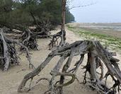 廣西:被侵蝕的海岸線
