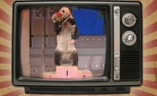 回顧熊貓歲月三:巴斯熒幕往事