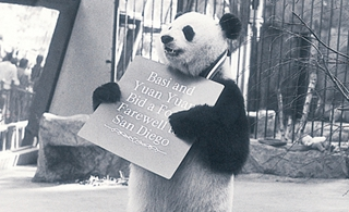 回顧熊貓歲月二:巴斯在美國