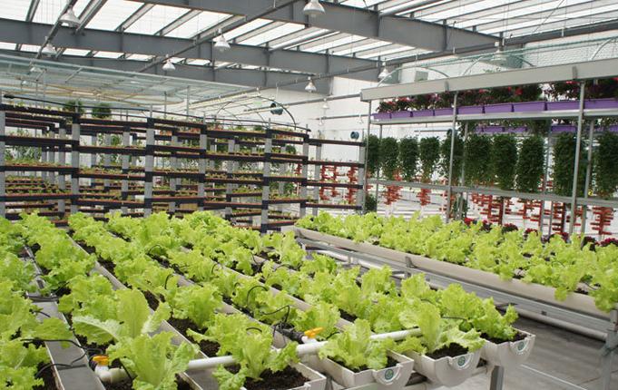 物联网让植物工厂实现可视化智能控制