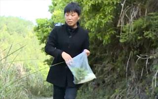 南平:大山育樂活人 生態養泉水魚