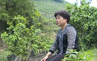 平和:種柚子種出新商機 再創業創出新機遇