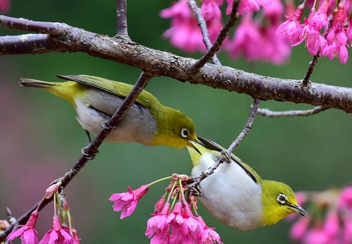 福州:初春時節鳥紛飛