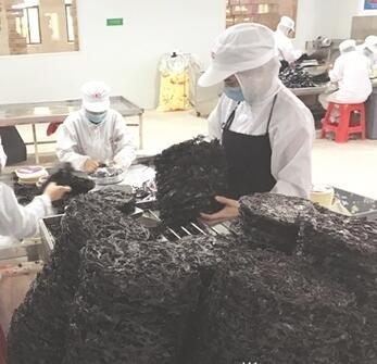 福建紫菜出口量倍增 泉企增美誉