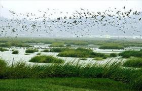 閩江河口濕地