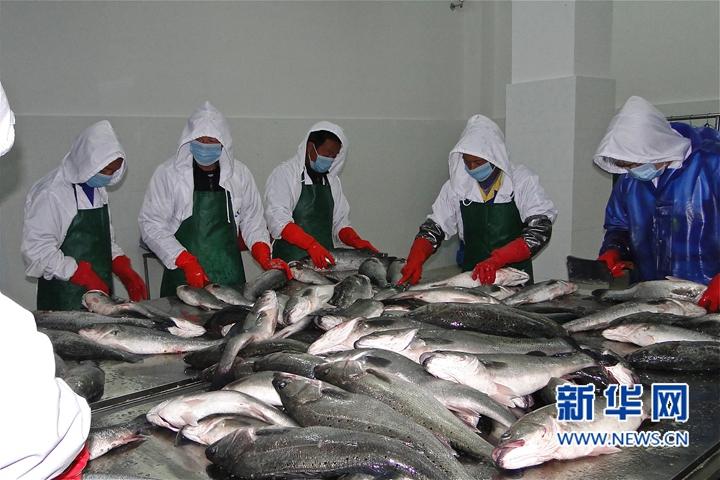 鱼苗供应带动2000个养殖户增收