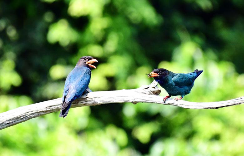 福建明溪国家重点保护野生动物数量大幅增加