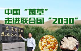 """中国""""菌草""""走进联合国""""2030"""""""