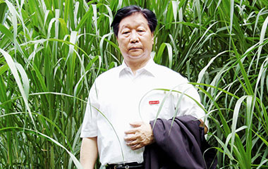 菌草發明人林佔熺的菌草發明應用之路