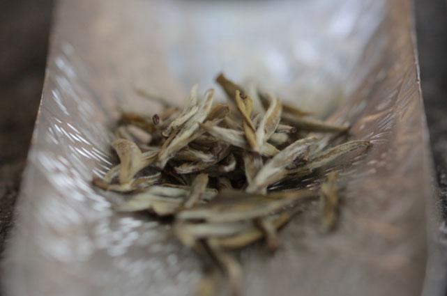 春天的茶葉等待六月茉莉花開,茶吸花香,花引茶味。