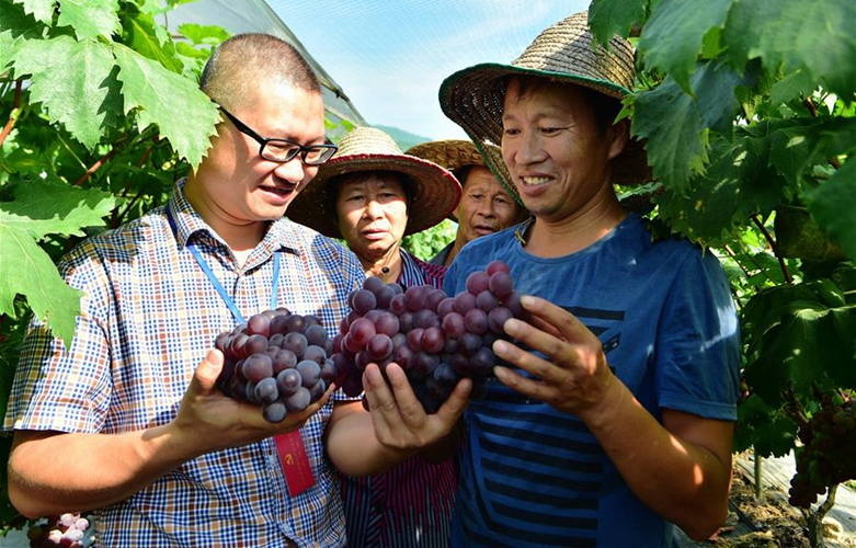 福建古田:發展特色水果種植 助力精準扶貧脫貧