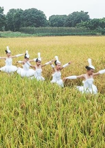 深秋,在稻田遇見詩歌