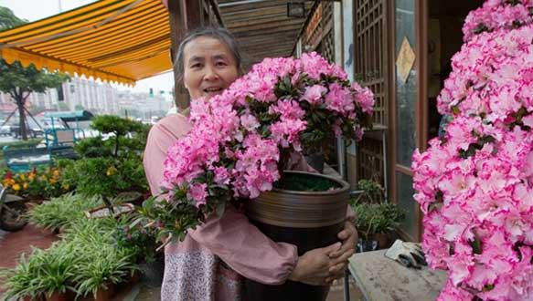 """来自漳州的""""年味"""":年宵花都开了,快回家过年吧!"""
