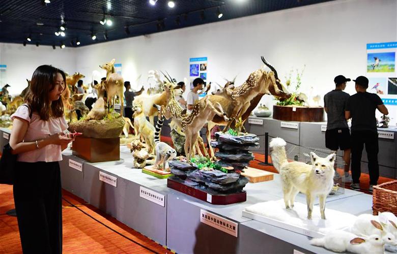 第四届中国动物标本大赛作品向公众开放