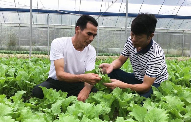 【我在厦门 我为改革开放点赞】职业农民郭防:绿色蔬菜种出火红好日子