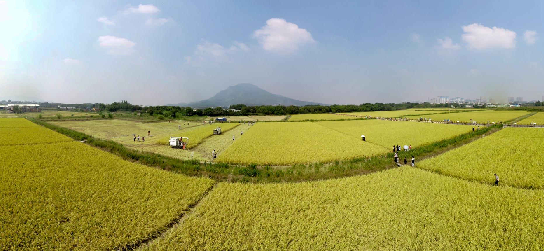 漳州:悅在金秋豐收時
