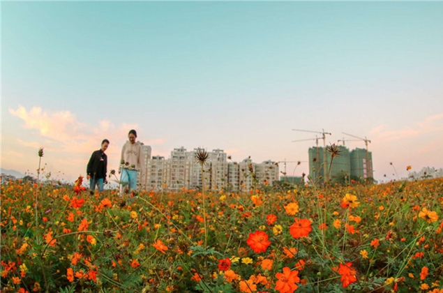 漳州:美麗花海翩然至