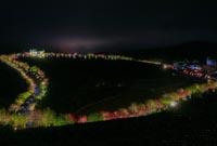 福建:臺品櫻花茶園夜景迷人
