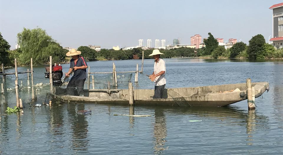 在延壽溪涵江段進行的漁網清理專項行動(資料圖)