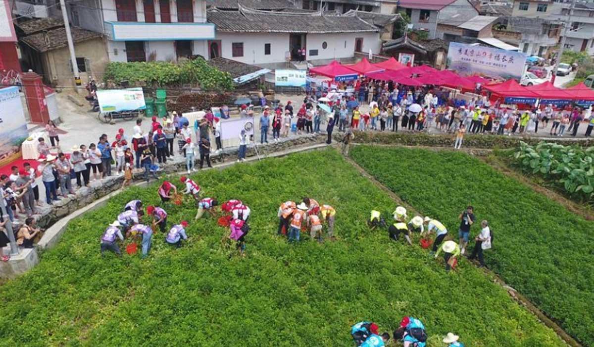 福建永泰:首屆兩岸花生節舉行