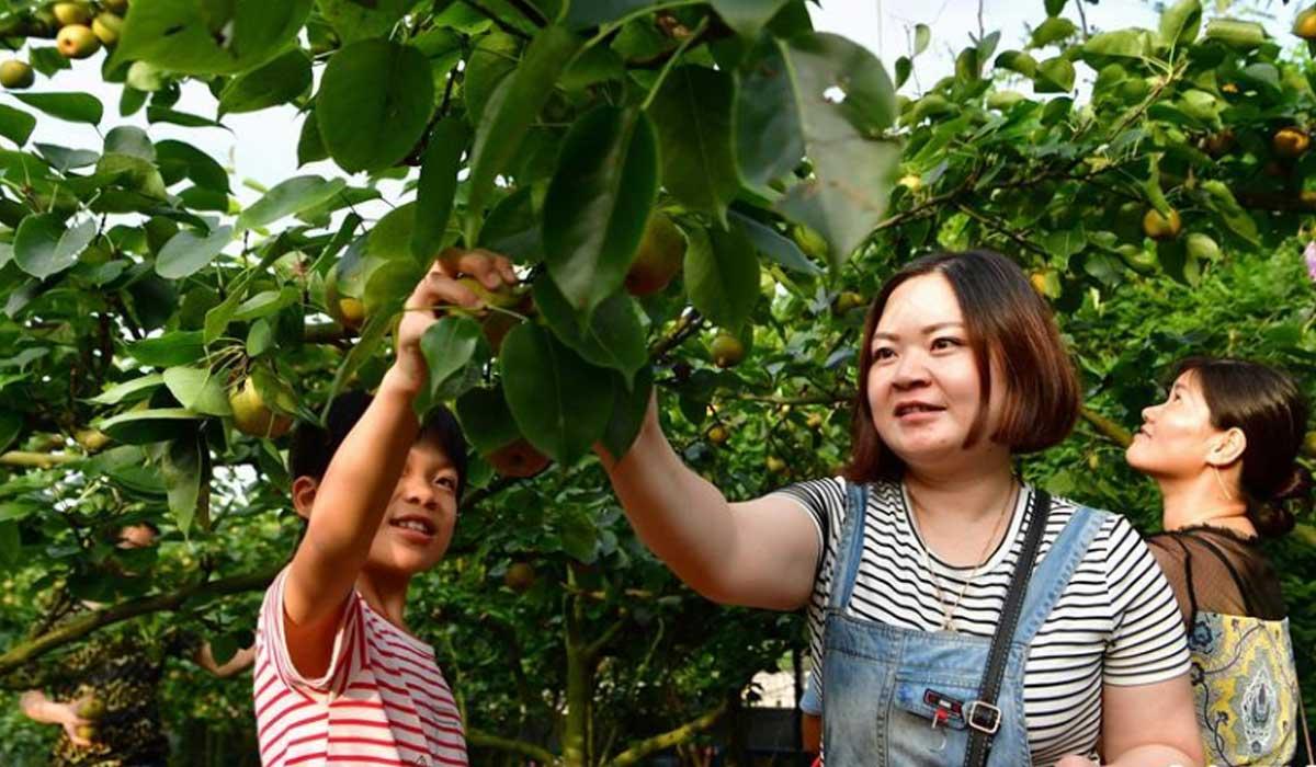 福建龍岩:貧困村變為美麗鄉村