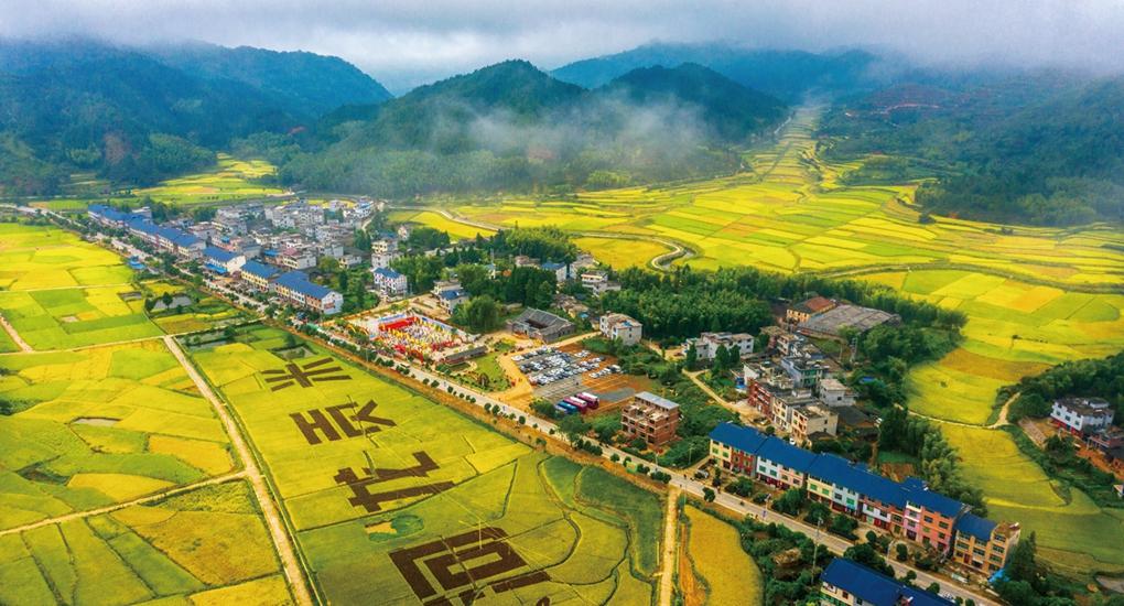 2018年,寧化縣帶動1258戶貧困戶種植河龍貢米,實現戶均增收1.45萬元。