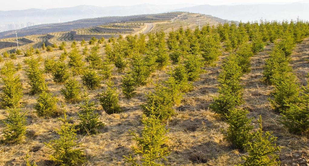福州幫助甘肅省定西市建設杉槐混交林生態扶貧基地。