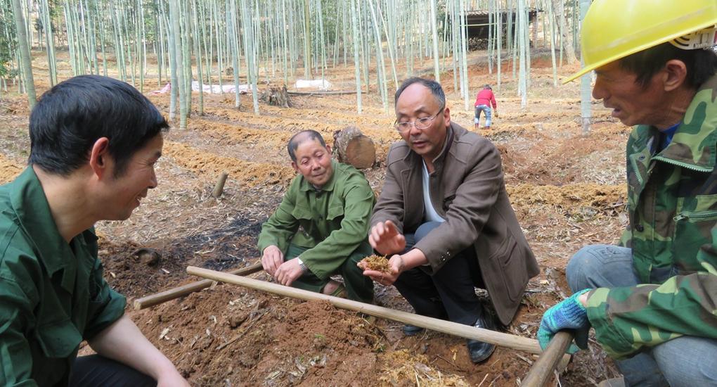 南平市科技特派員高允旺(右二)在順昌縣路下村指導菇農科學覆土及培養料幹濕度調配。