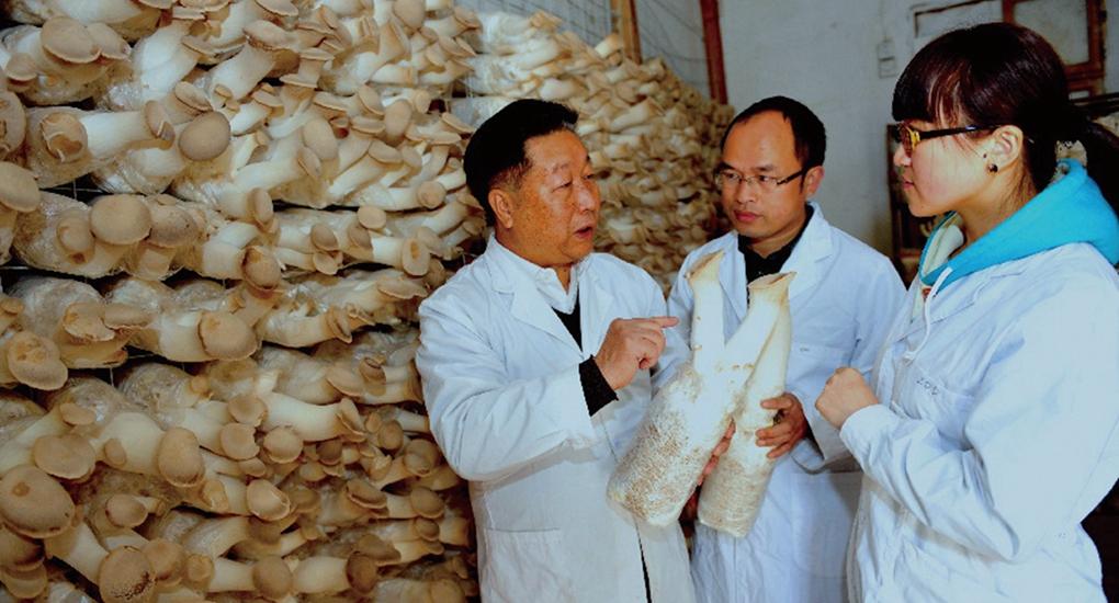送技術上門——福建農林大學林佔熺教授(左一)帶領技術人員到閩寧村(現為閩寧鎮),指導村民栽培食用菌。