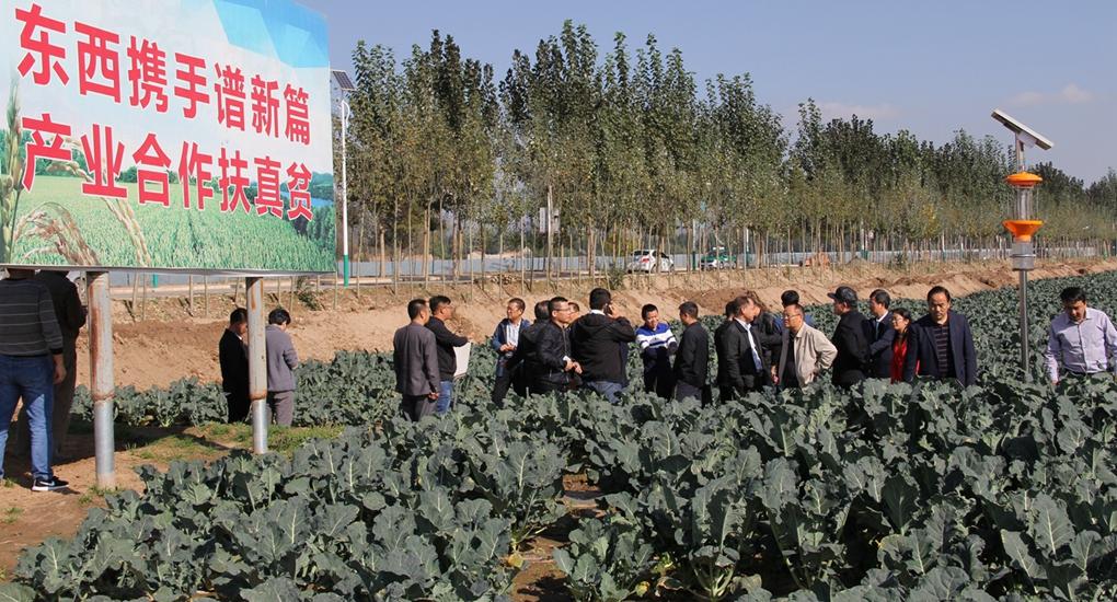 産業合作——廈門市企業在甘肅省臨夏回族自治州投資種植高原夏菜項目。