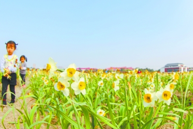 漳州水仙:最是氤氳能致遠