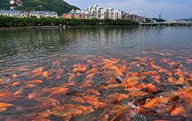 福鼎:桐山溪畔人魚同樂