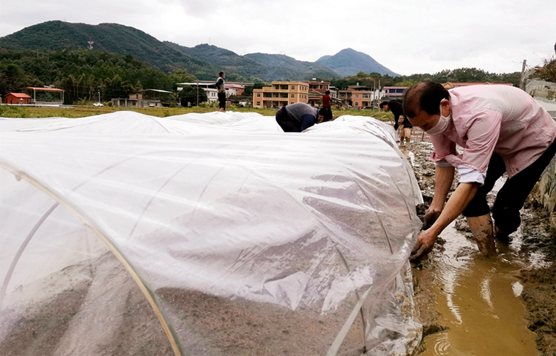 福建南安:戰疫情 保春耕