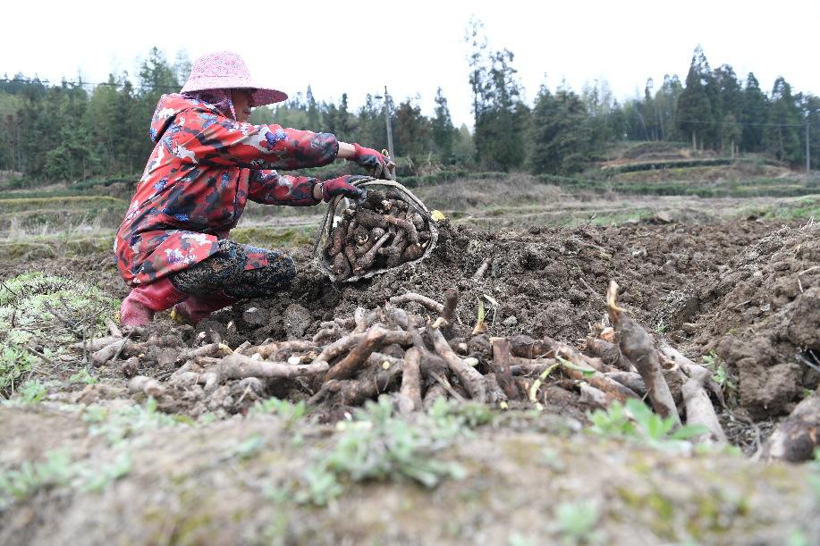 福建:抓好春耕備耕 保障農業生産