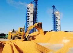 福建省涉糧企業復工率達99.9%