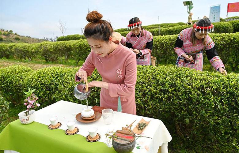 福州春茶節線上開採