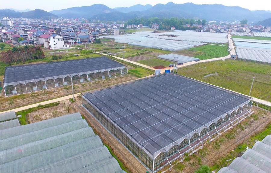福建水南:做強做優葡萄産業 推動鄉村産業振興