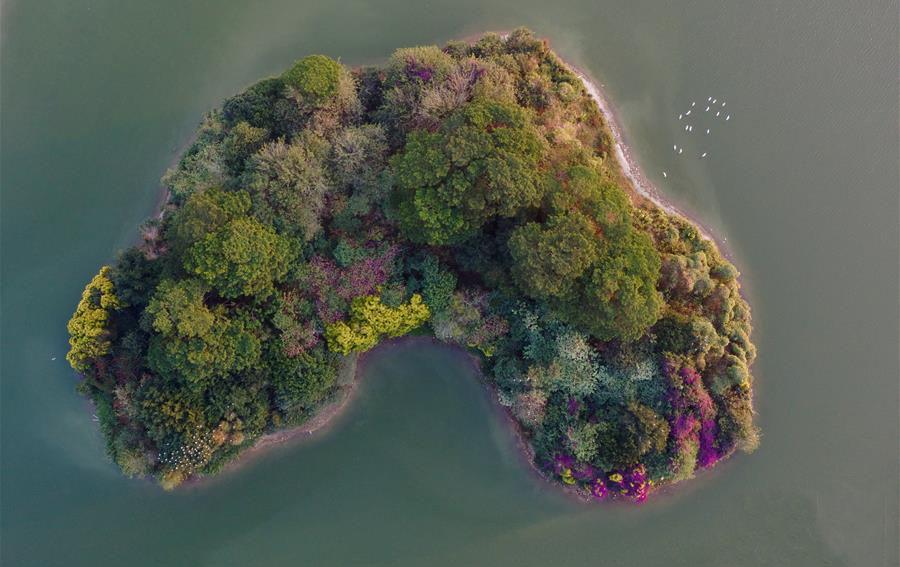 碧湖生態園內的心形小島