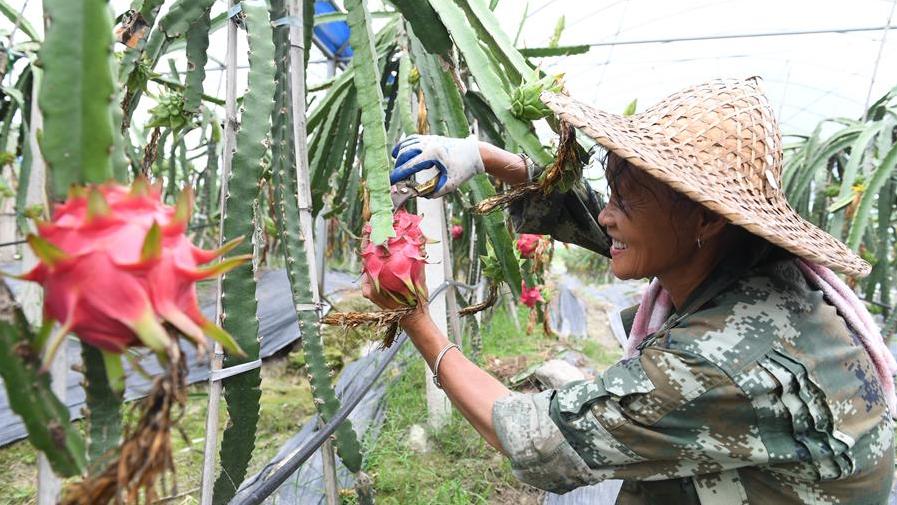 福建政和:發展特色農業 助力鄉村振興