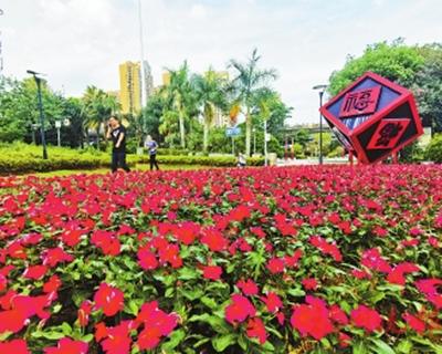 閩江公園長春花盛開 係首次從國外引進的新品種