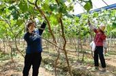 福建仙遊:扶貧産業基地 助力精準扶貧