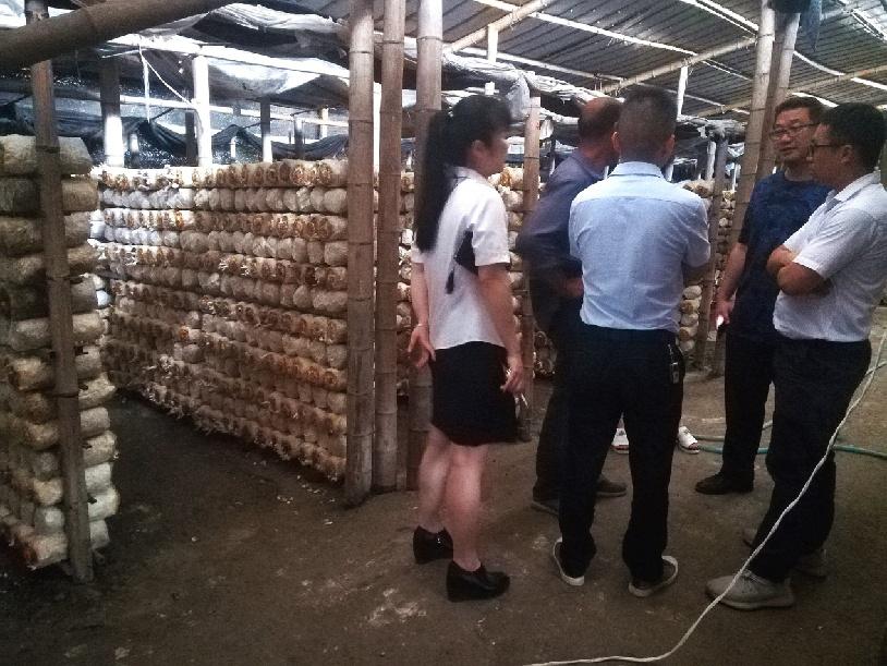 中國銀行寧德古田支行至食用菌企業了解生産情況