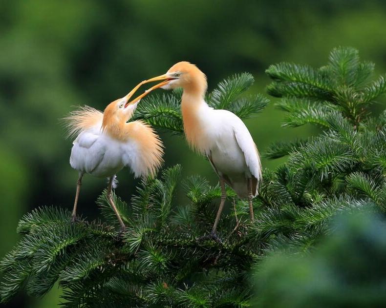 """福建明溪舉辦生態觀鳥産業發展現場會 打造""""觀鳥森林康養""""基地"""
