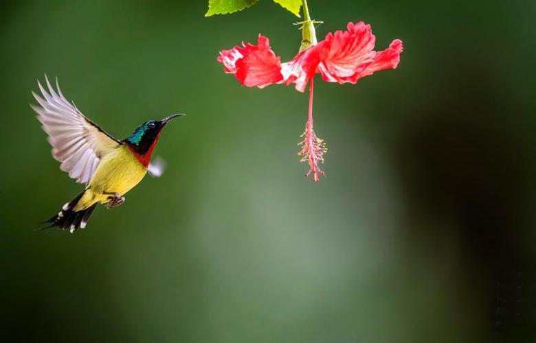 觀鳥莫相煎 且行且珍惜