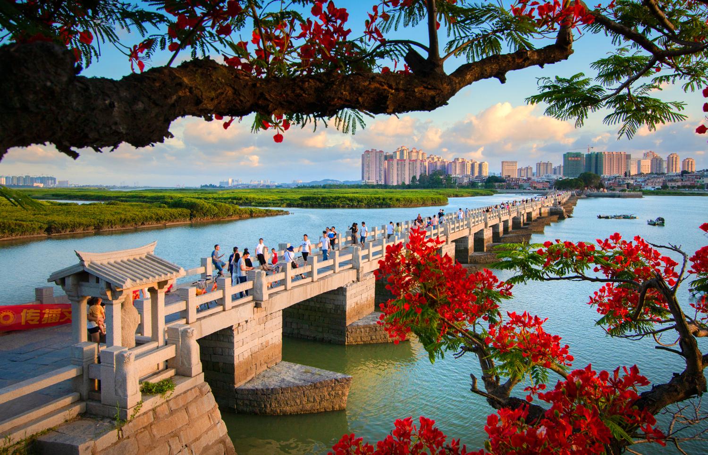 洛陽橋鳳凰花開