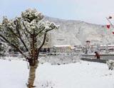 甘肅宕昌三月降瑞雪